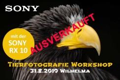 SONY ALPHA 7 Workshop am Freitag, 7.12.2018